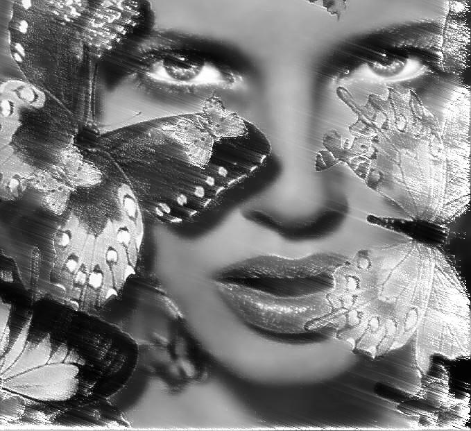 windybutterflies